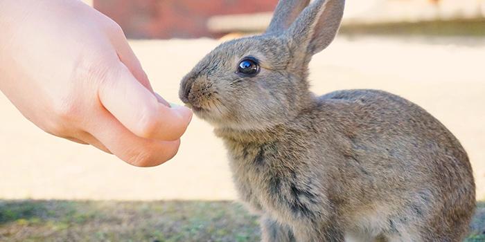 動物の癒し効果