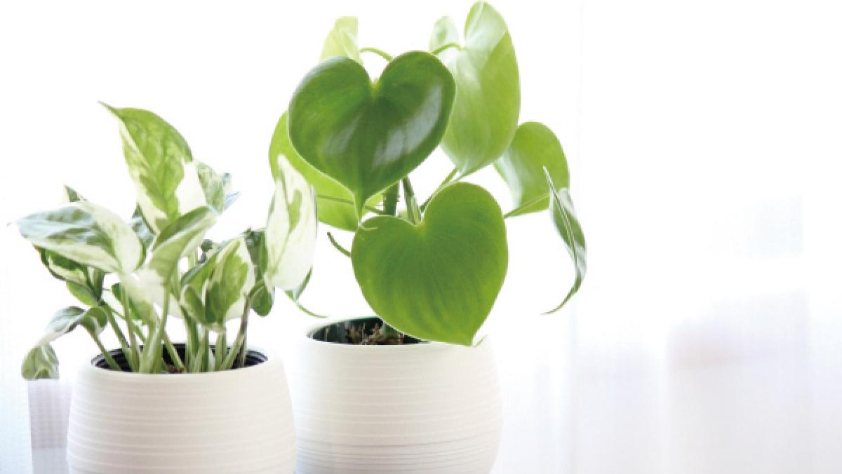 住環境と観葉植物